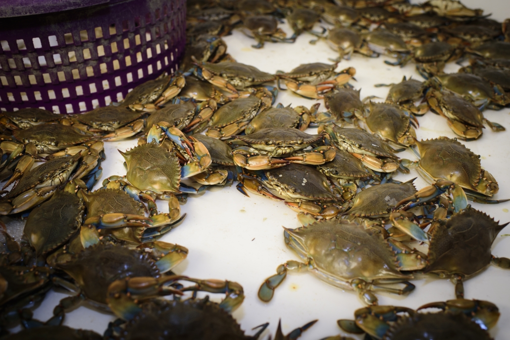 , Soft-Shell Crabs Sauteed, Author Pat Branning, Author Pat Branning